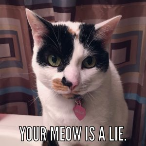 Your meow is a lie2